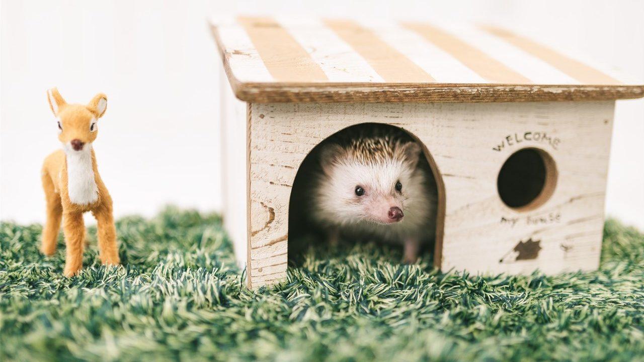 ハリネズミと小屋
